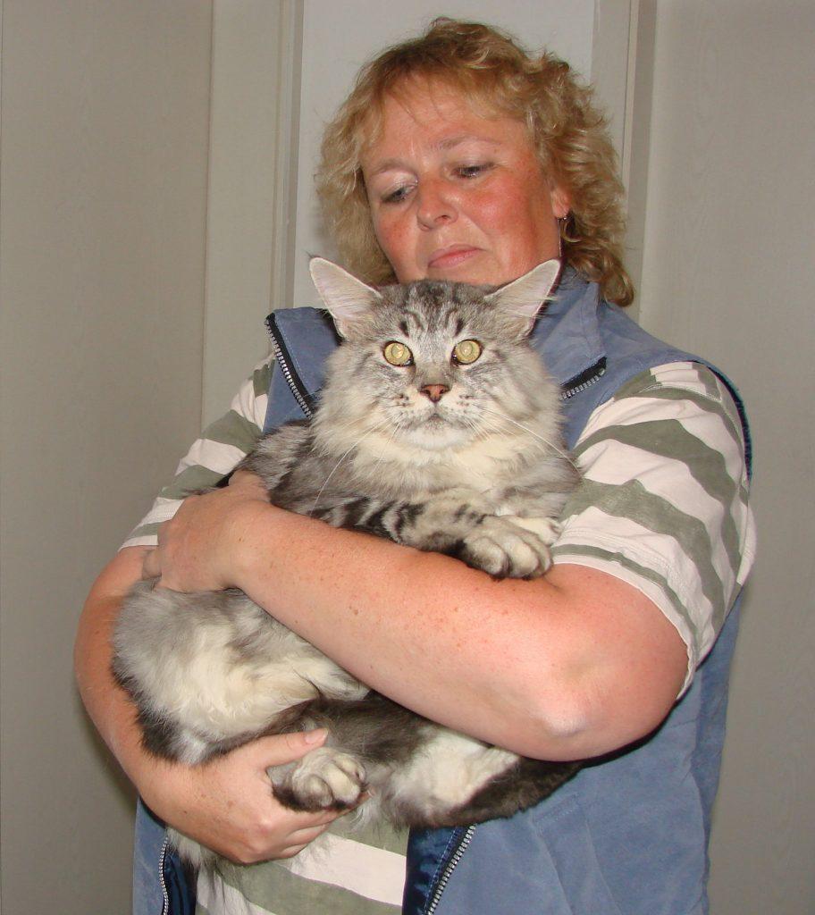 Liebevolle Betreuung und Versorgung ihrer Katze / ihres Katers bei Ihnen zuhause.